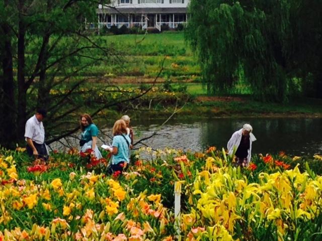 Oaks Daylily Festival